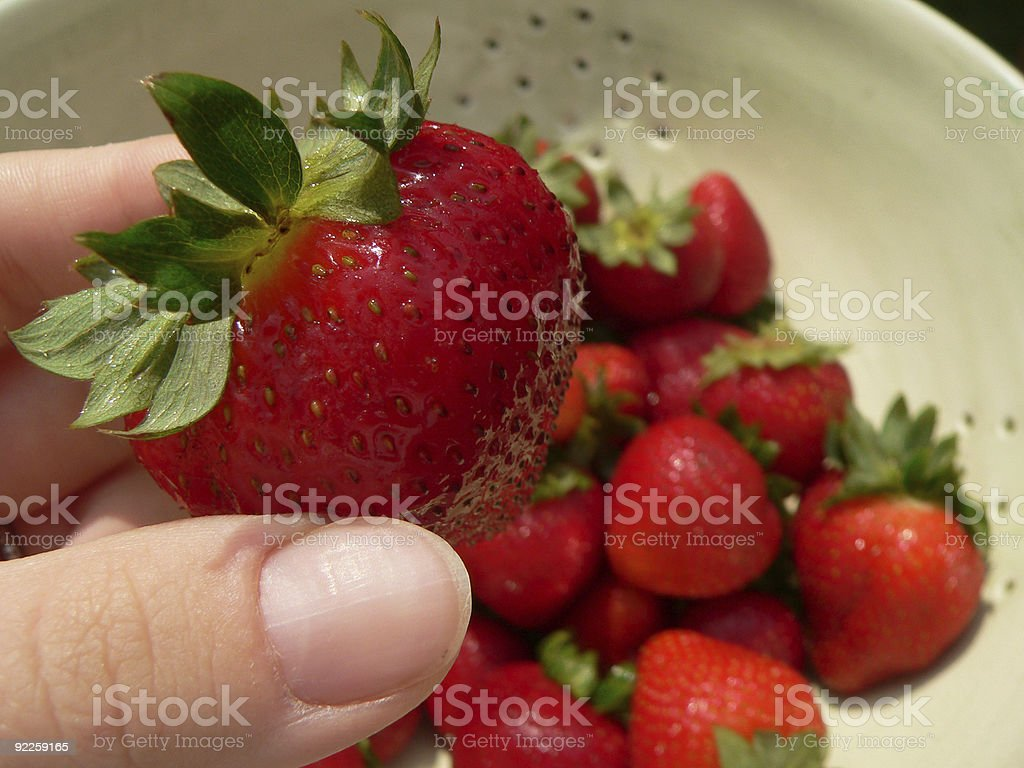 Picking a strawberry stock photo