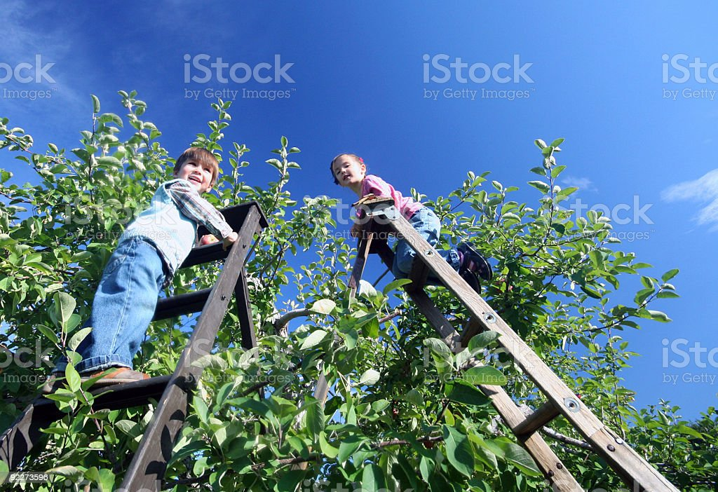 Picking apples royalty-free stock photo