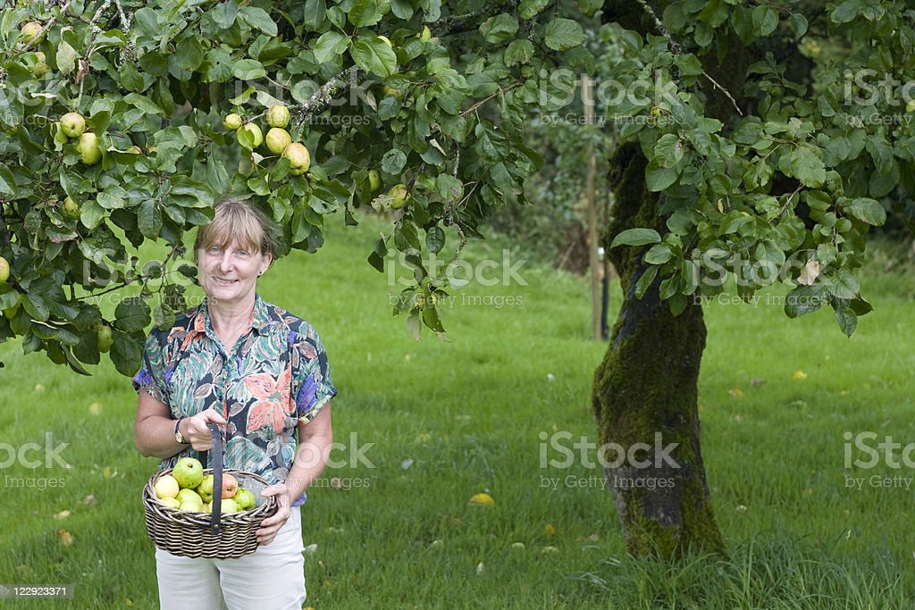 Picking Apples Series royalty-free stock photo
