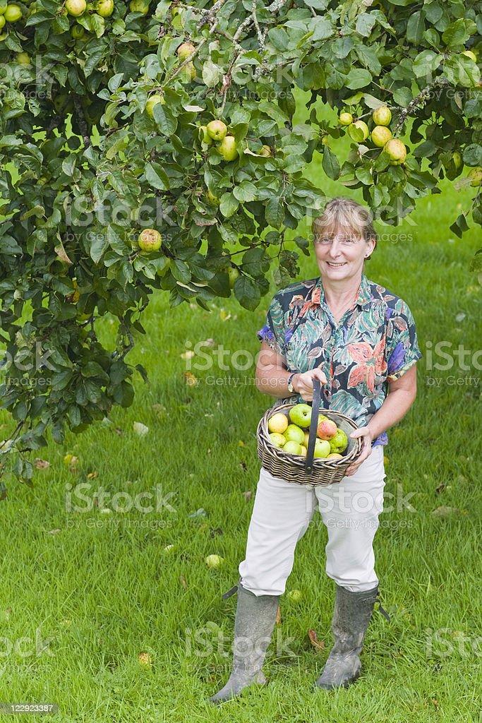 Picking Apples Series stock photo
