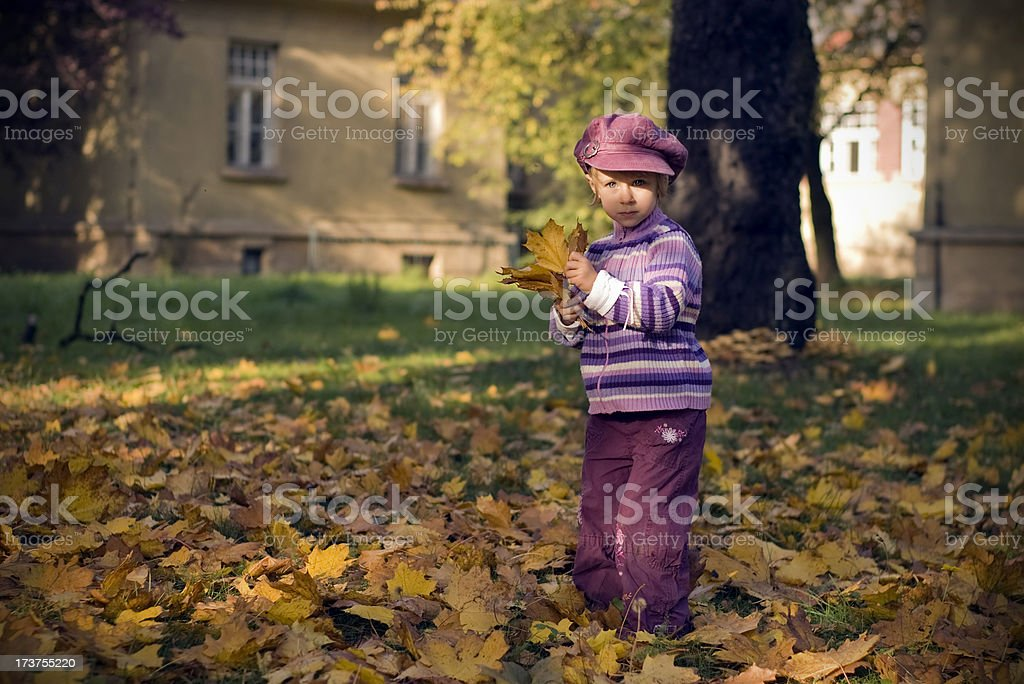 Picking leaves stock photo