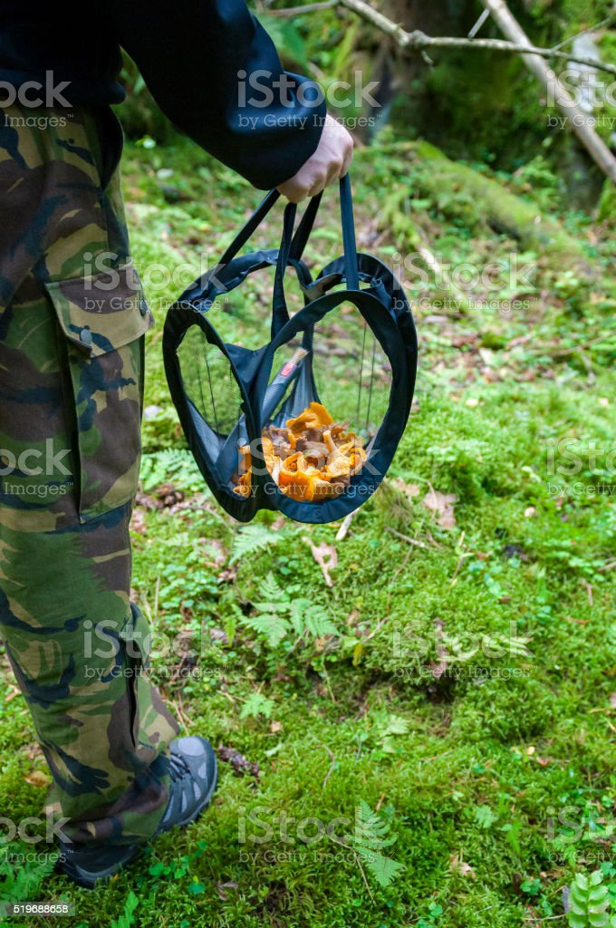 Picking mushrooms in the forest stock photo