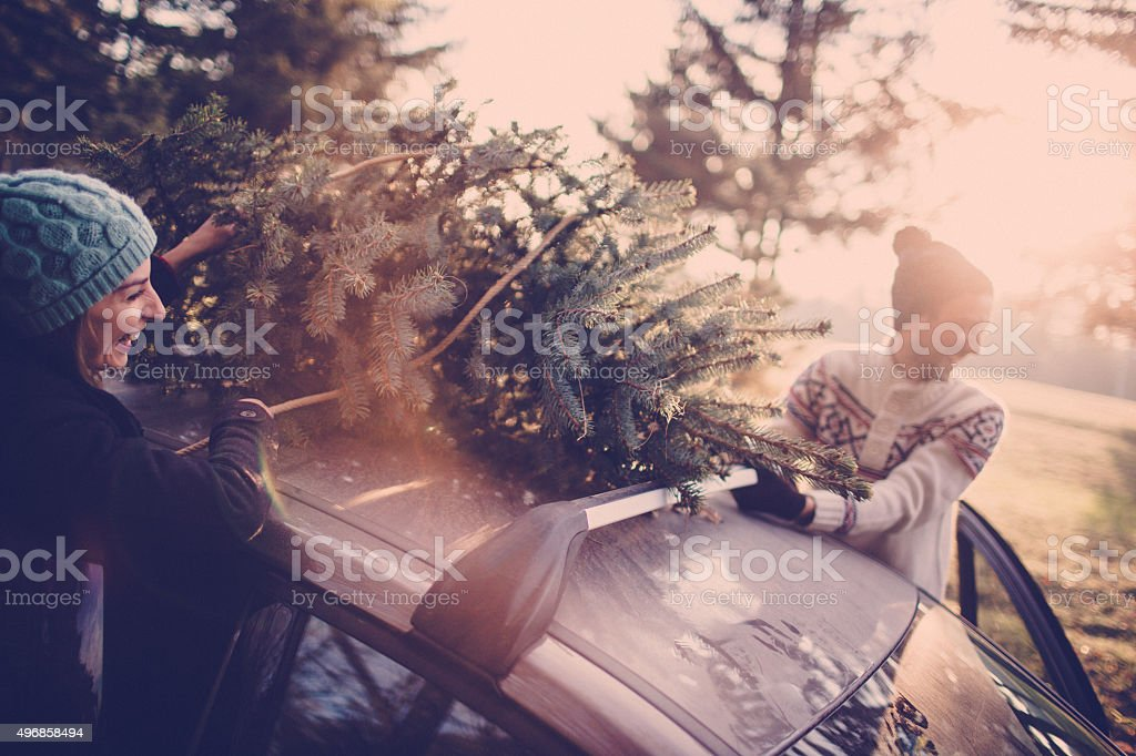 Picking the Christmas tree stock photo