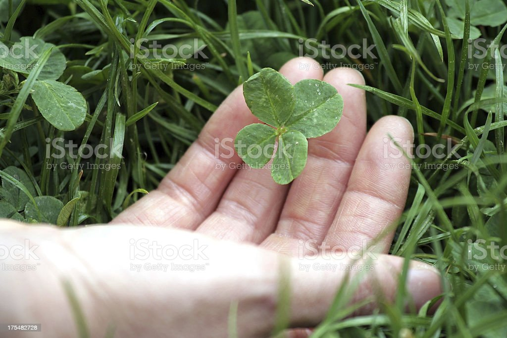 Picking up a four leaf clover royalty-free stock photo