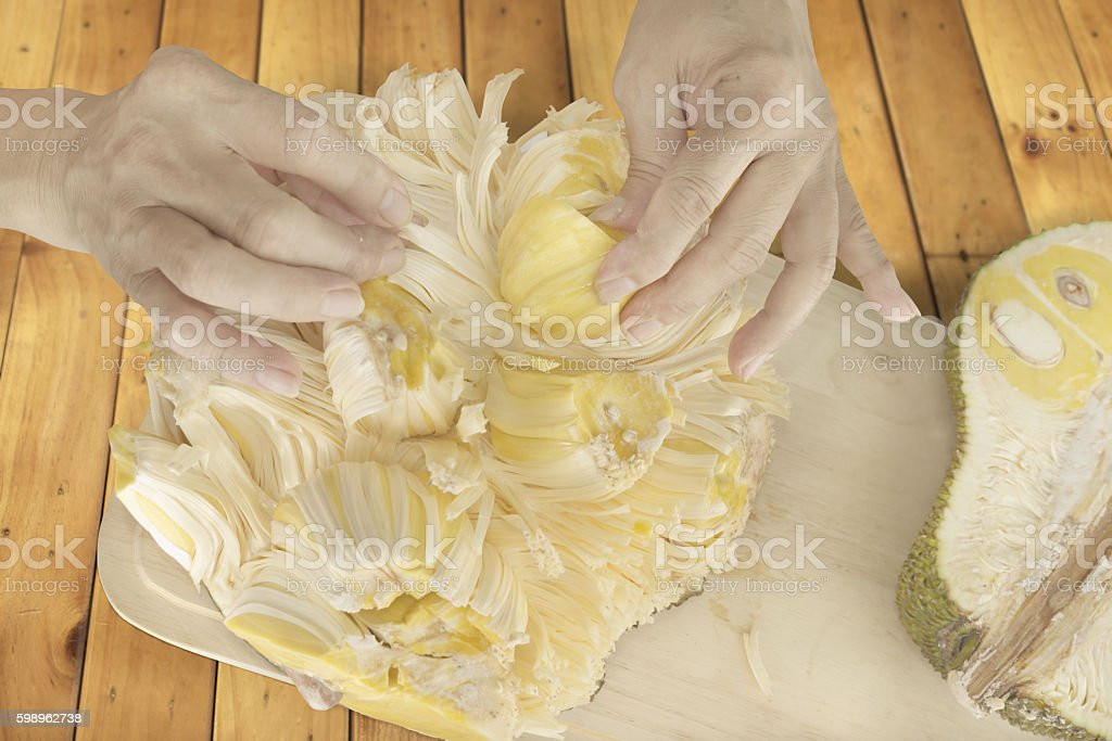 Picking up a piece of Jackfruit stock photo