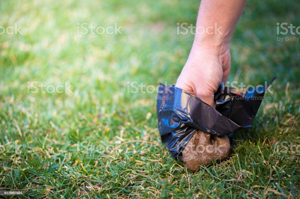 Picking up after Dog stock photo