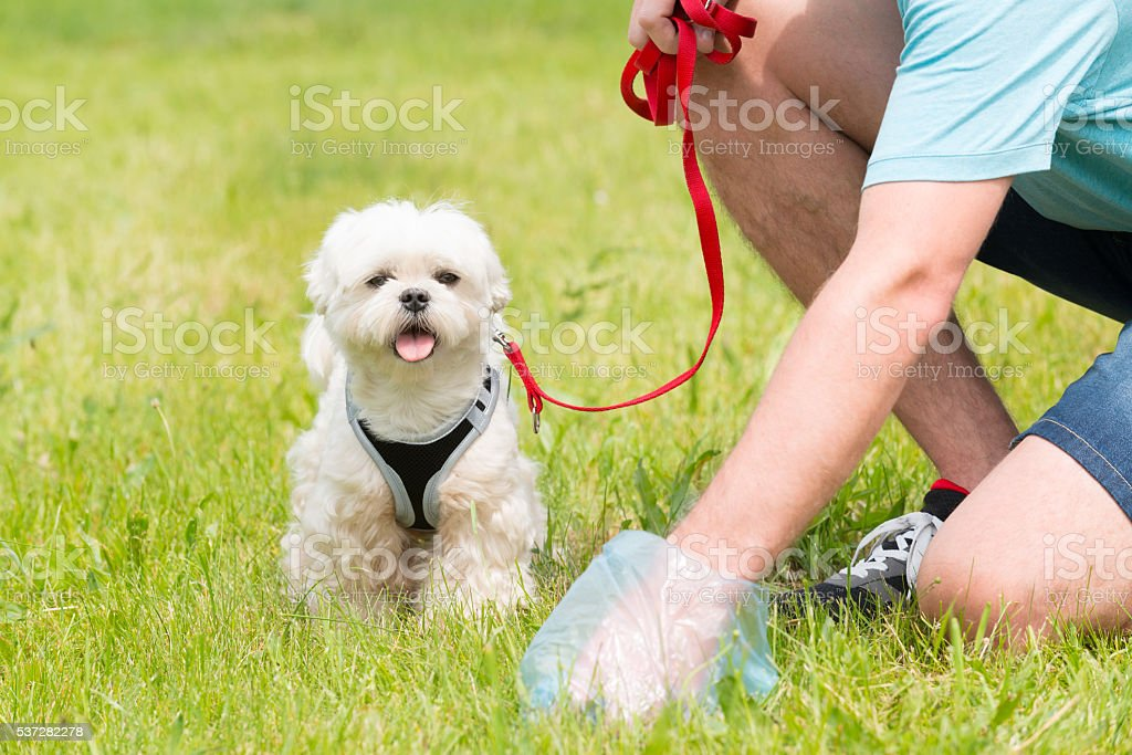Picking up dog poop stock photo
