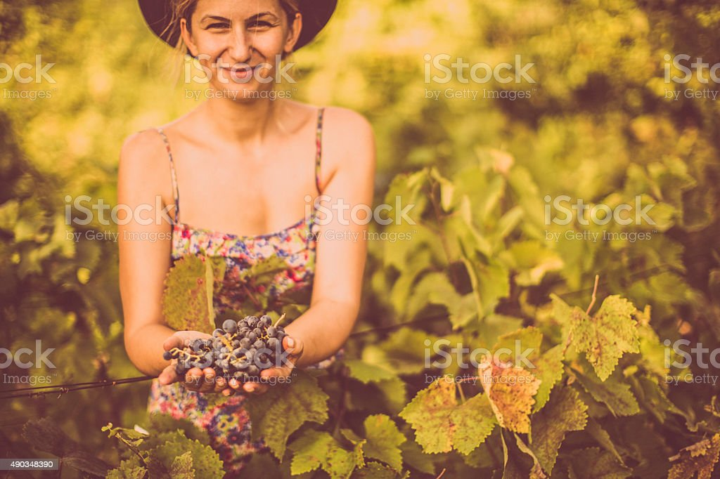 Picking up the grapes stock photo