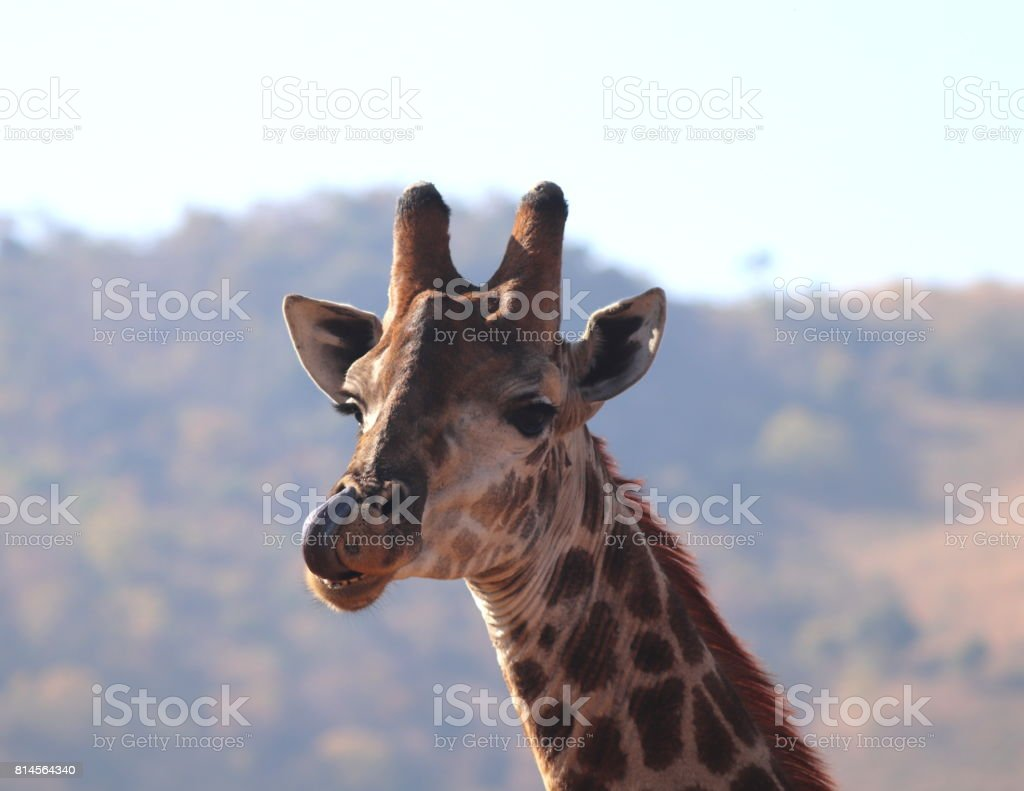 Picking You Nose? stock photo