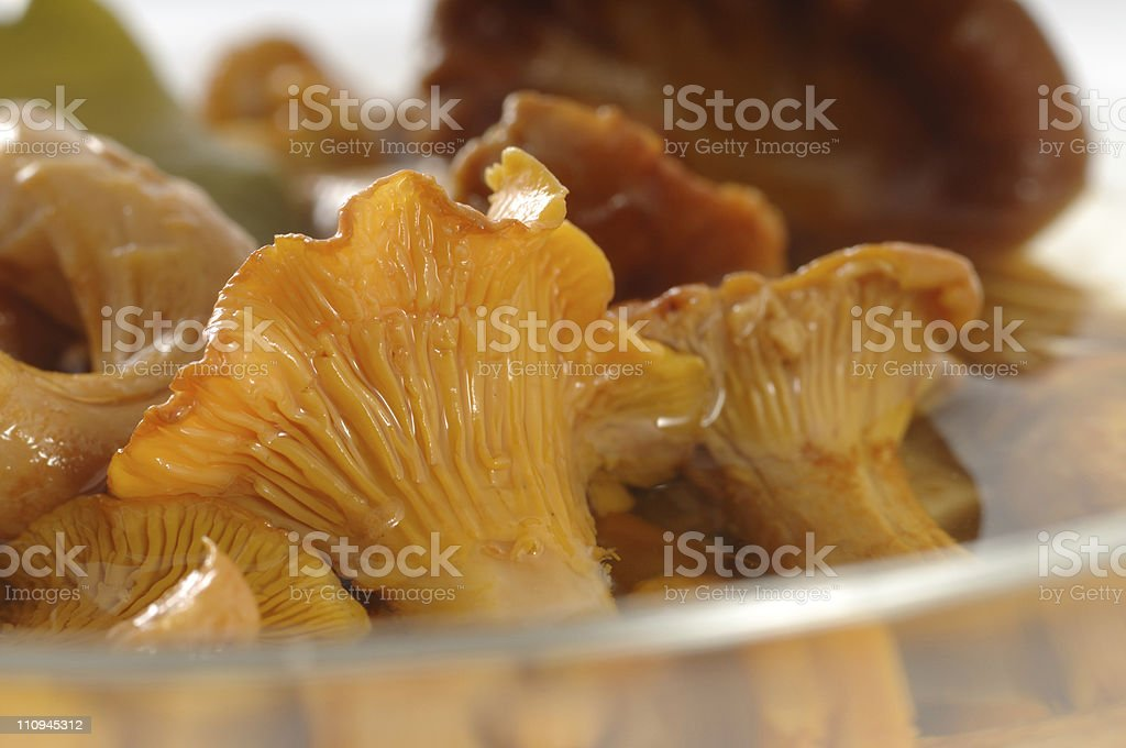 Pickled Chanterelle royalty-free stock photo