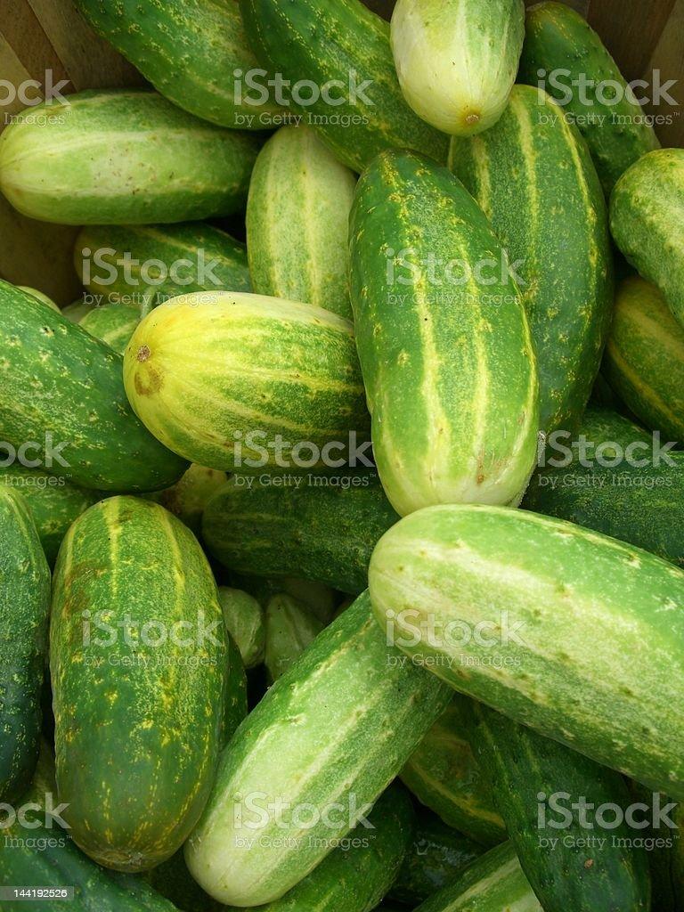 Pickling Cukes stock photo