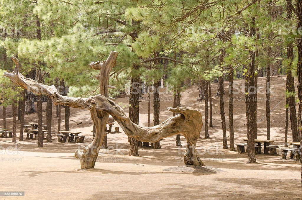 Picnic area in forest with table and benches. stock photo