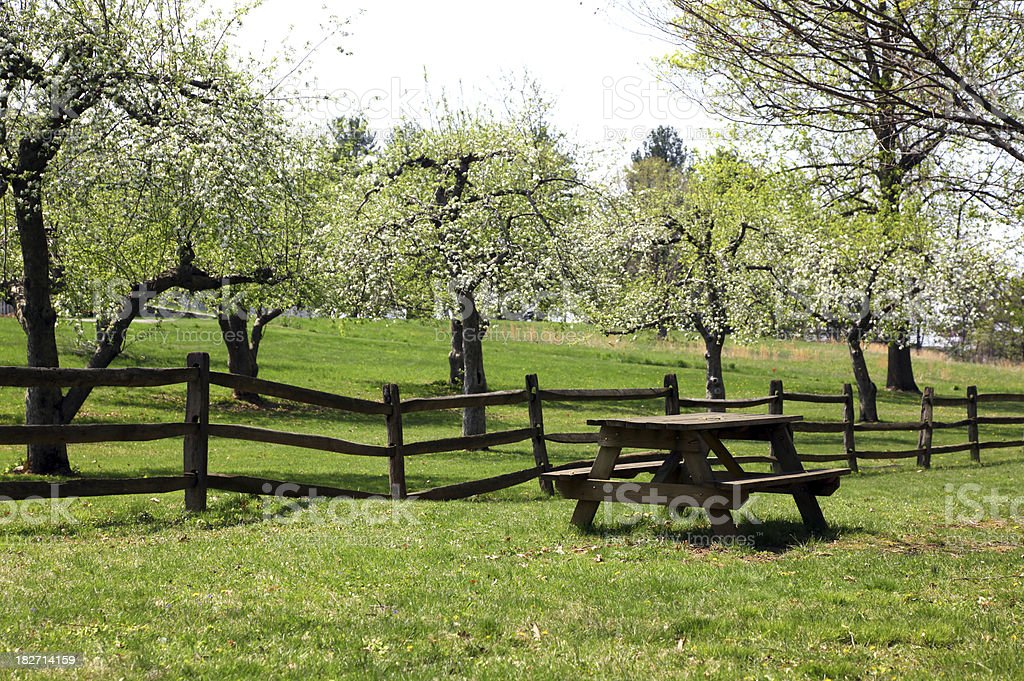 Picnic Table and Apple Grove royalty-free stock photo