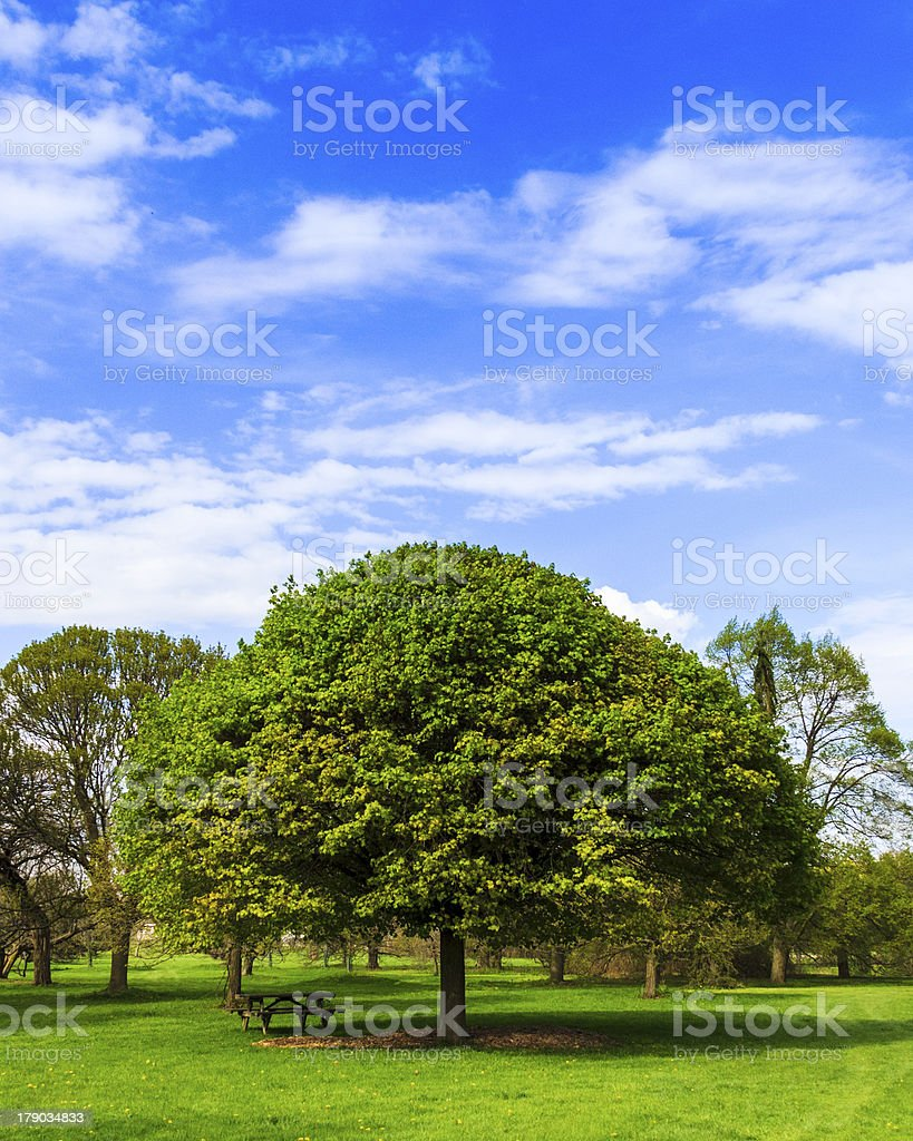 Picnic Table Under a Tree royalty-free stock photo