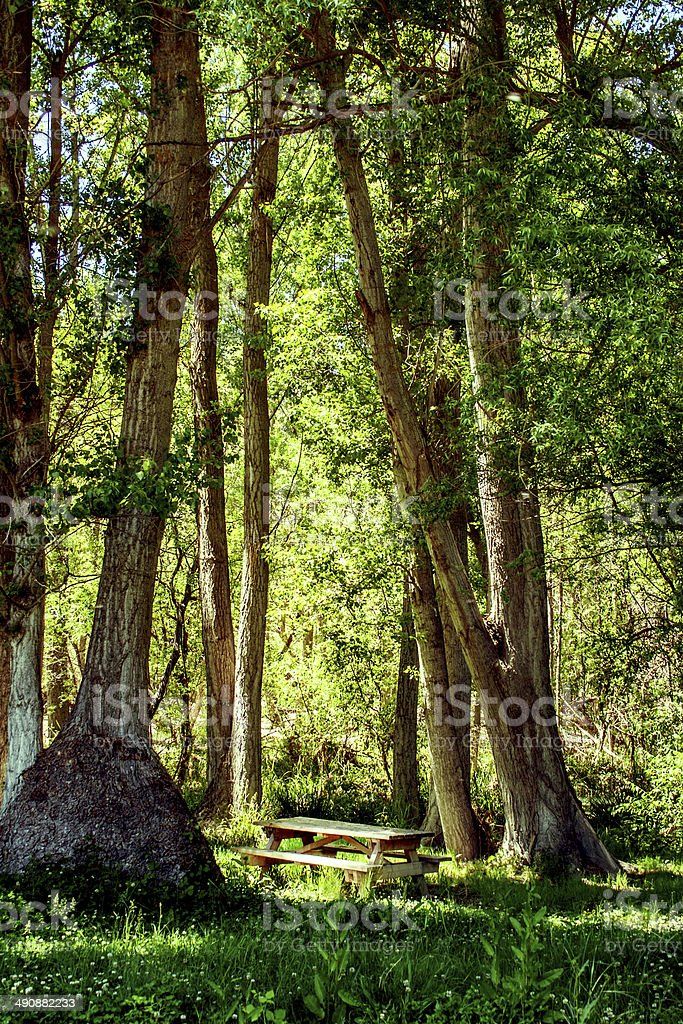 Picnic table under a trees stock photo