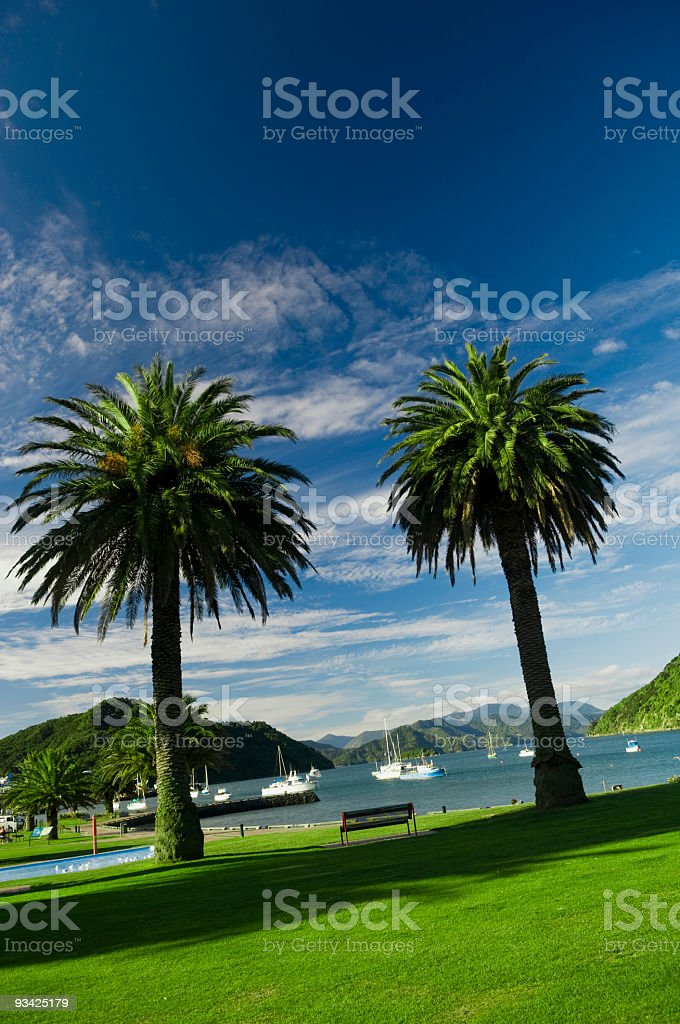 Picton Harbor Palms stock photo