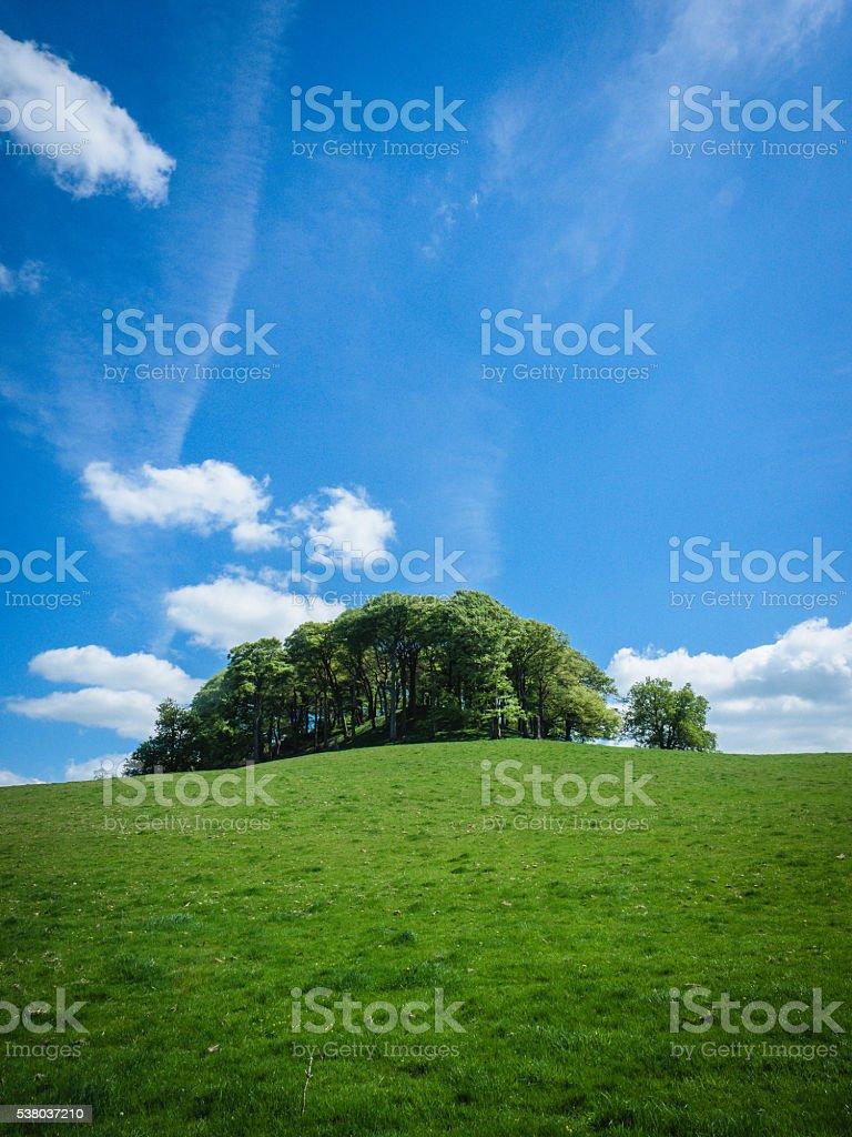 Pictor stock photo