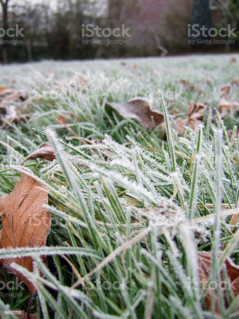 Picture at ground level of grass blades covered in frost royalty-free stock photo