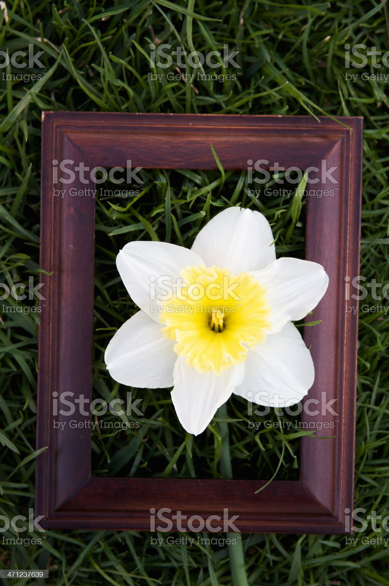 Picture Frame in Grass with Flower royalty-free stock photo