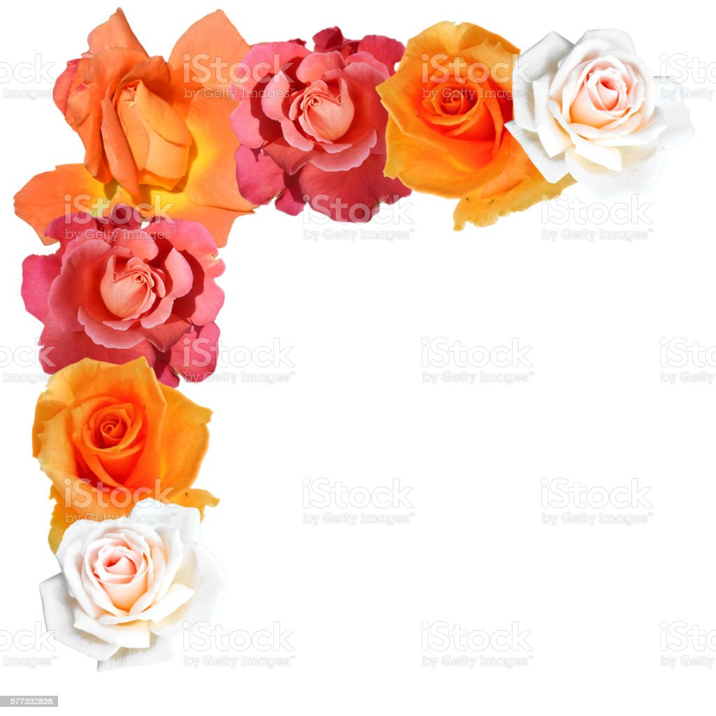 Picture frame made of roses stock photo