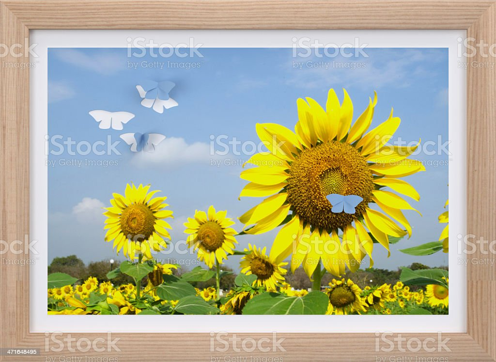 picture in frame. royalty-free stock photo