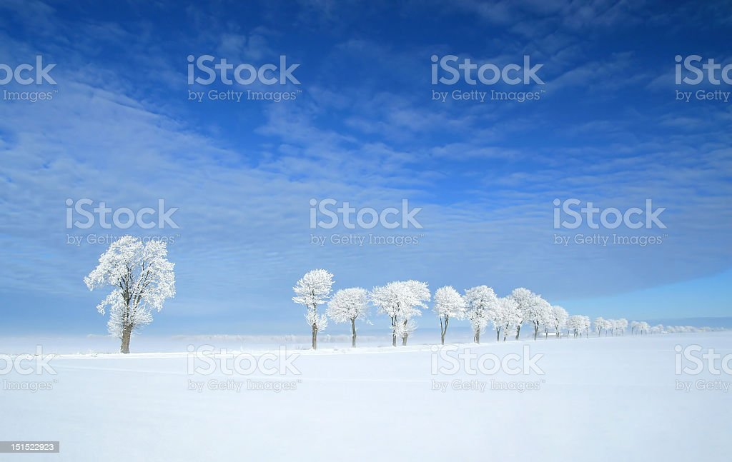 Picture in the winter of froze trees royalty-free stock photo