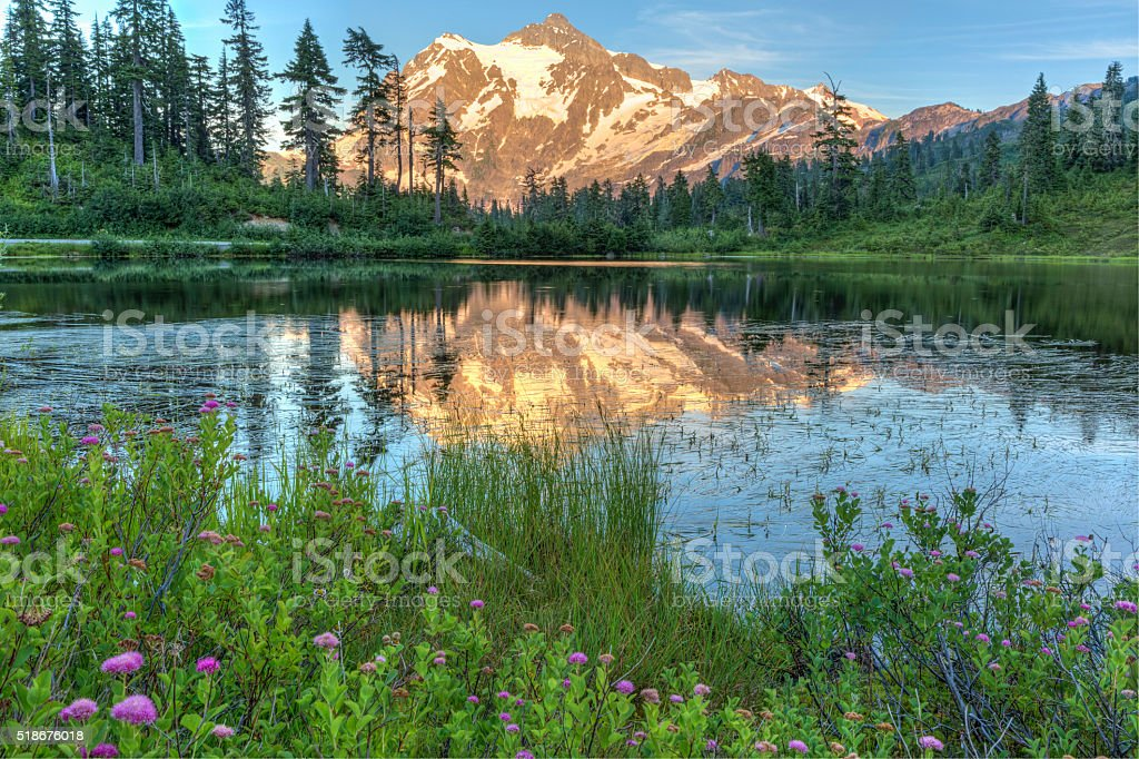 Picture Lake Wildflowers and Mt. Shuksan stock photo