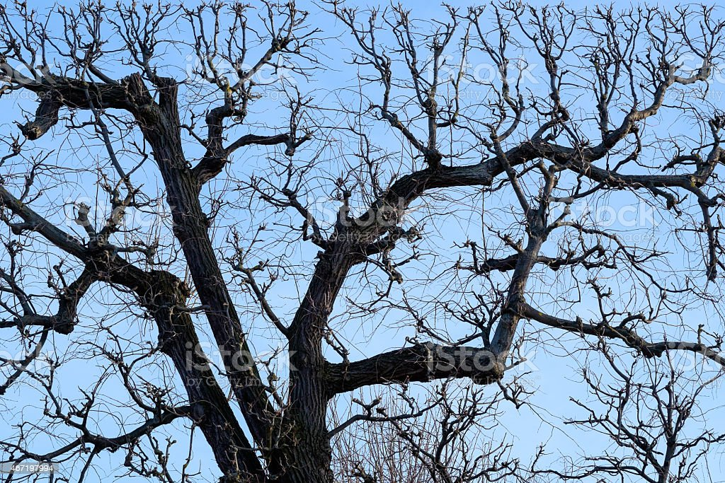 Picture of a Bare Tree stock photo