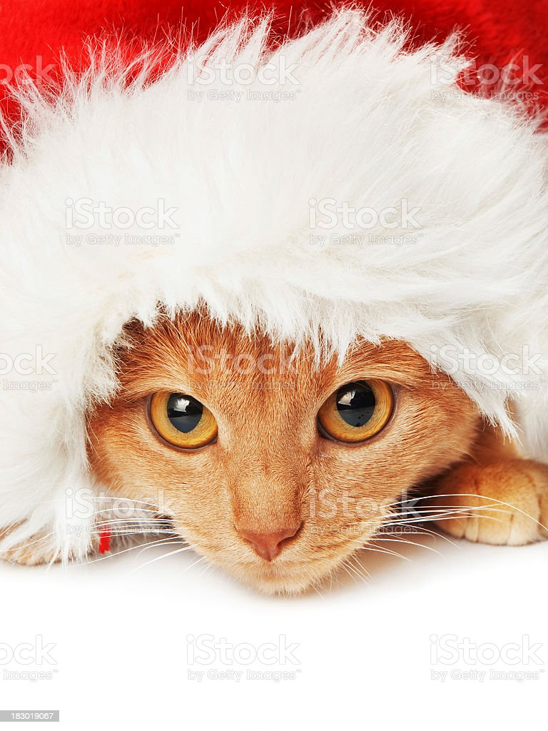 A picture of a cat wearing a Santa hat royalty-free stock photo