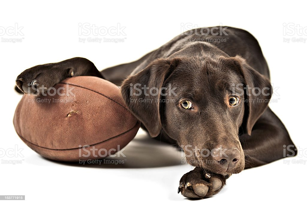 A picture of a dog with his paw on a football stock photo