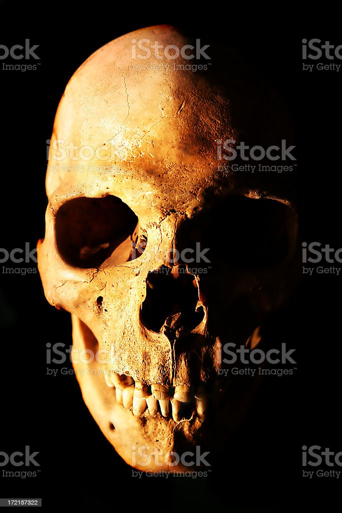 A picture of a human skull on a black background royalty-free stock photo