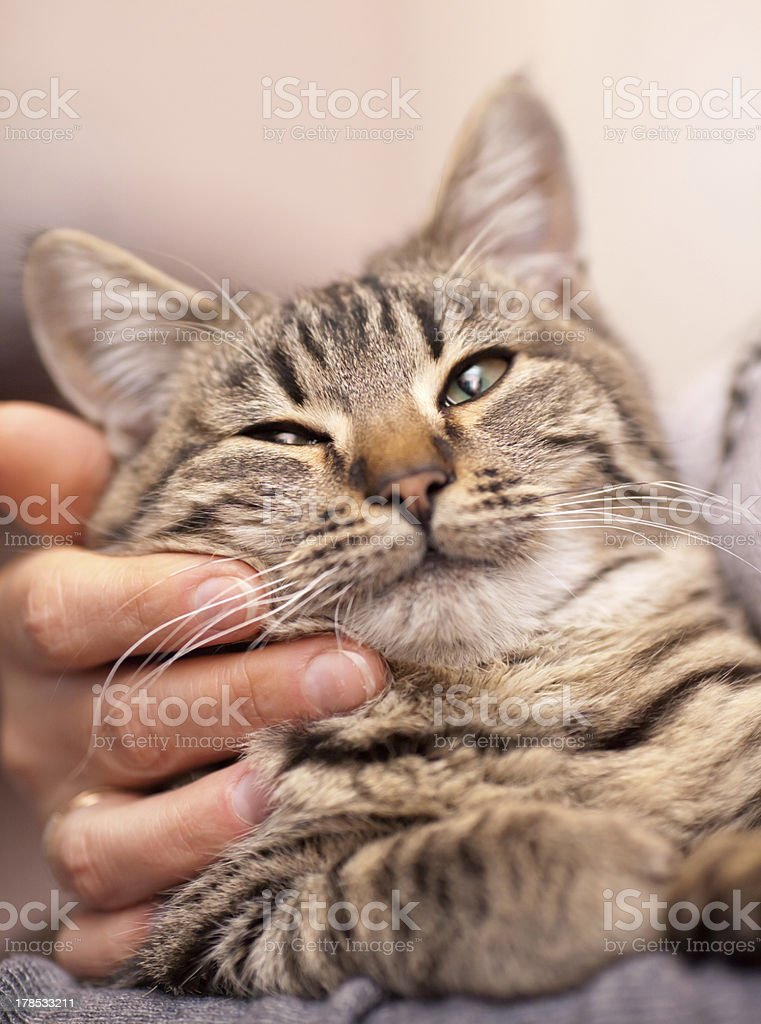 Picture of a marble cat with his face being touched stock photo