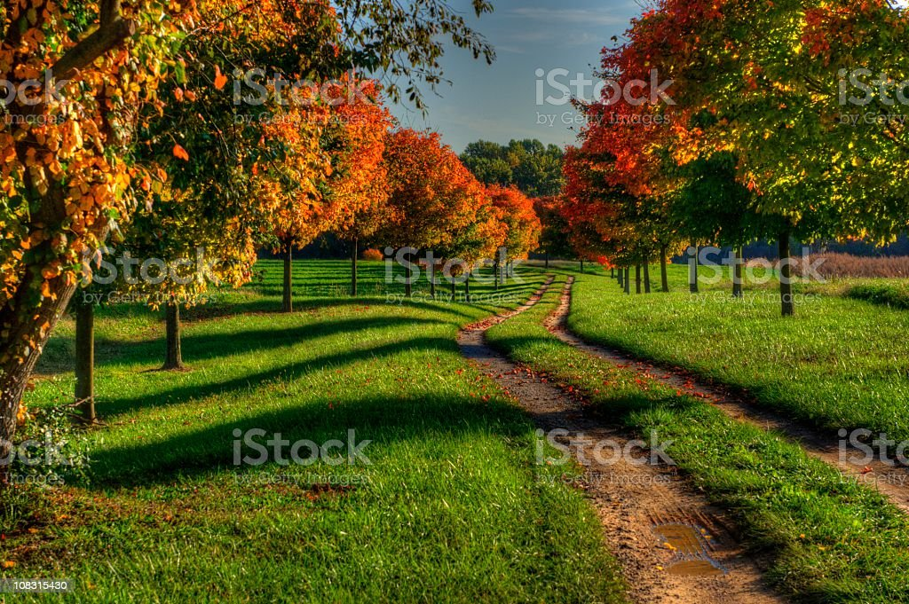 A picture of a path during autumn royalty-free stock photo