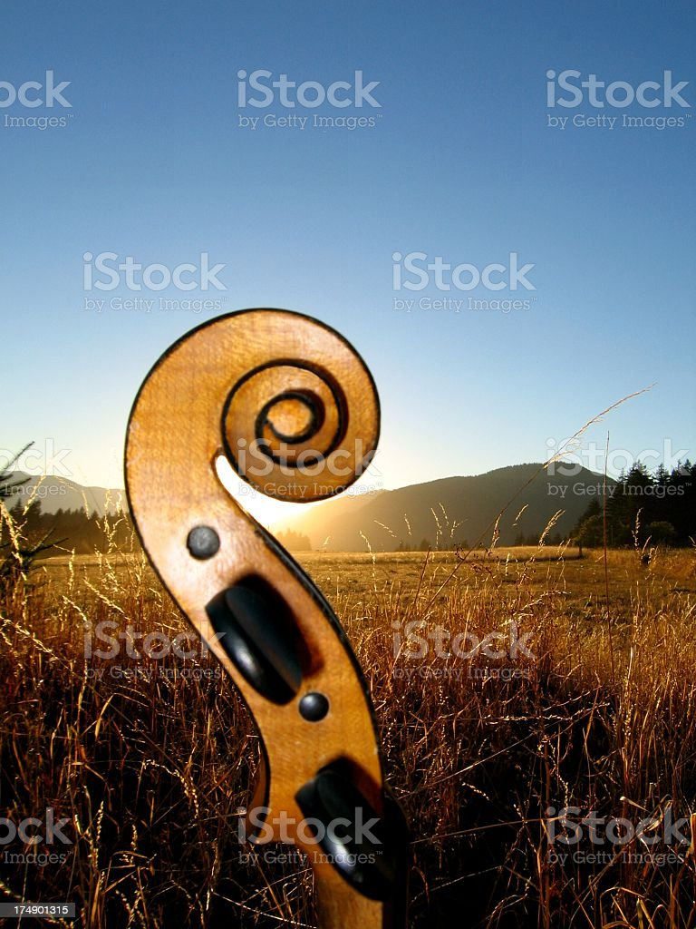 A picture of a Stradivarius in a field stock photo