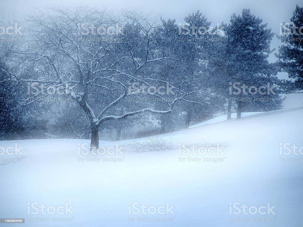 Picture of a tree and meadow in winter covered in snow royalty-free stock photo