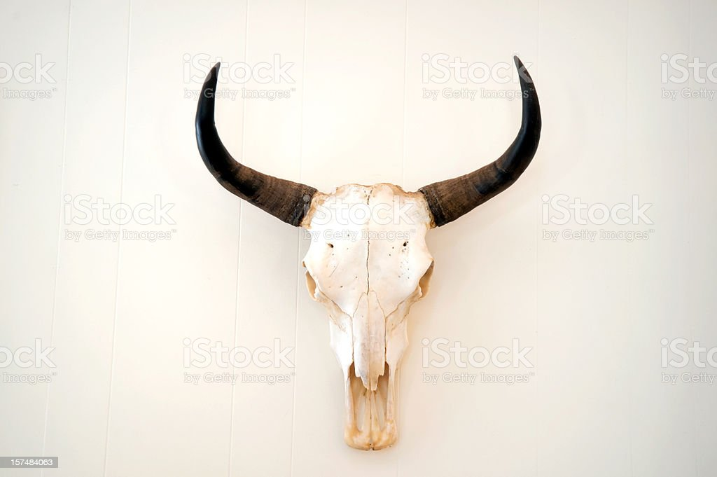 A picture of an animal skull on a white background stock photo
