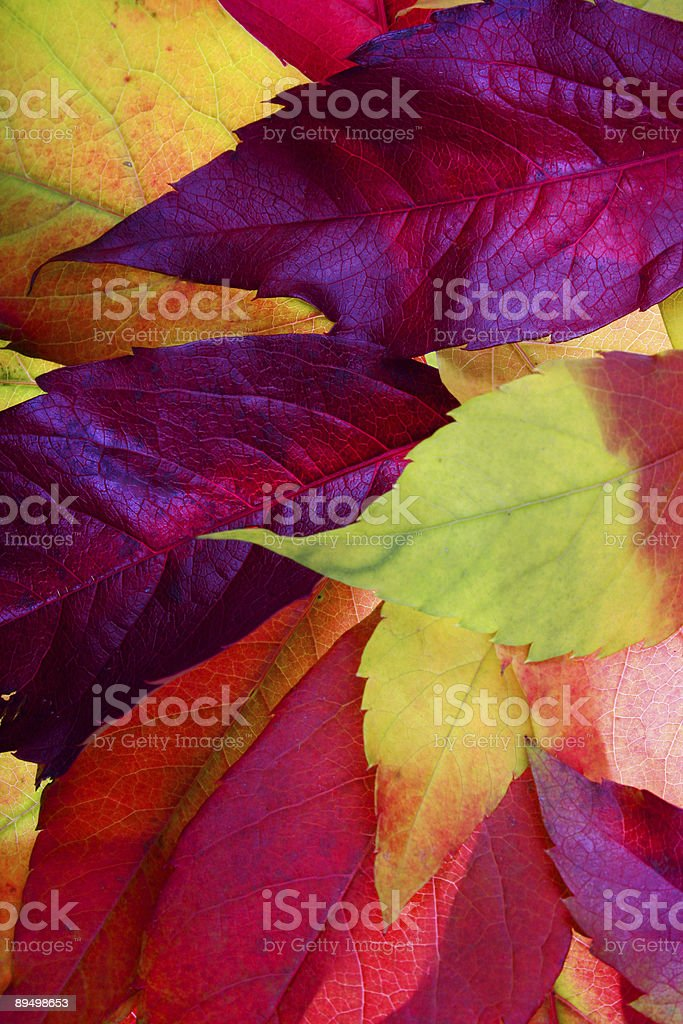 A picture of colorful autumn leaves on a background royalty-free stock photo