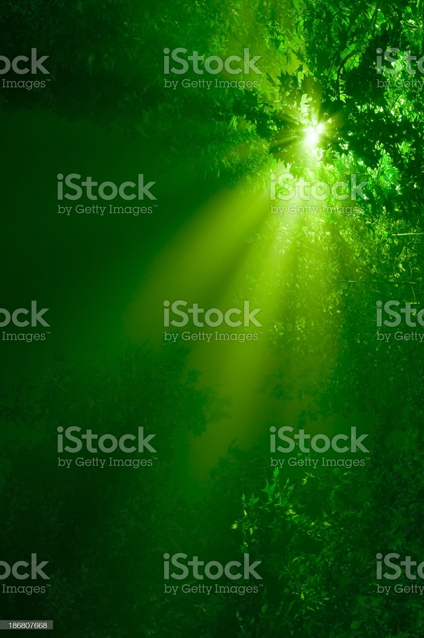 A picture of green sunbeams in the forest royalty-free stock photo