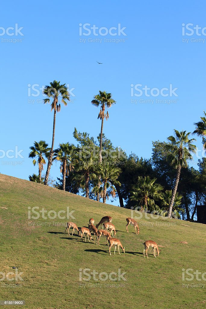 Picture of group of deer under blue sky royalty-free stock photo