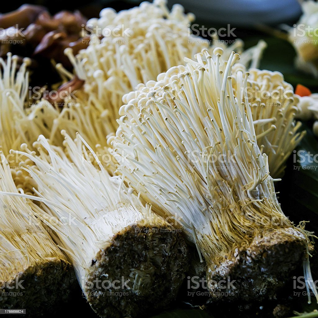 Picture of mushroom royalty-free stock photo