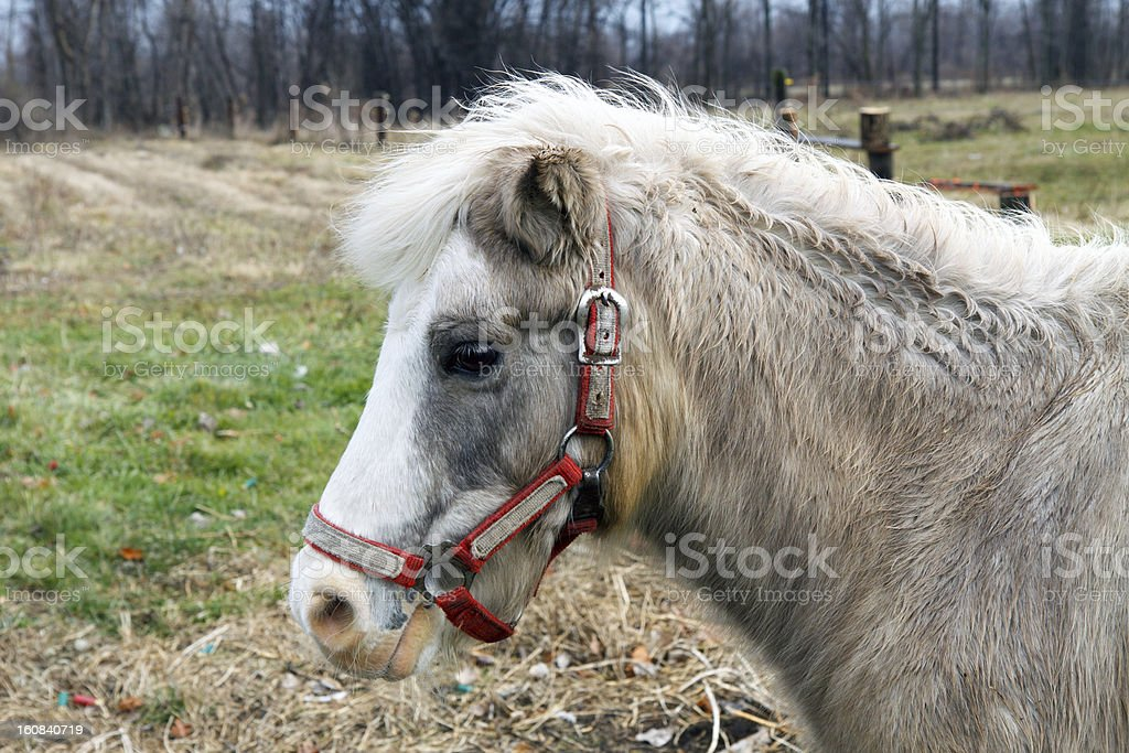 DSLR picture of profile of Horse royalty-free stock photo