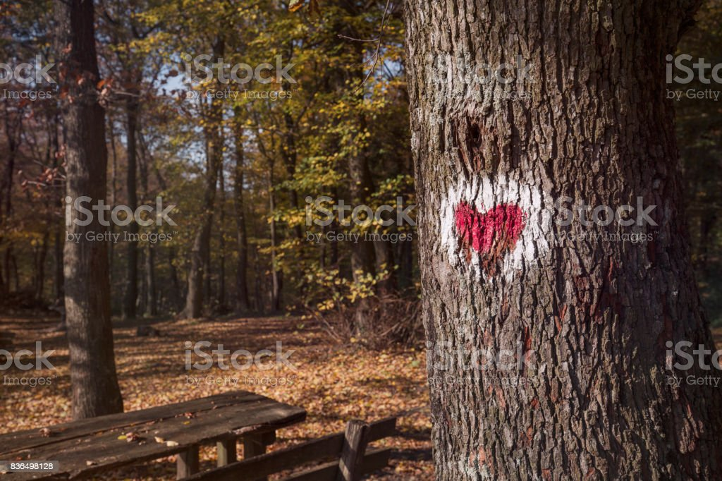 Picture of red heart painted on tree stock photo