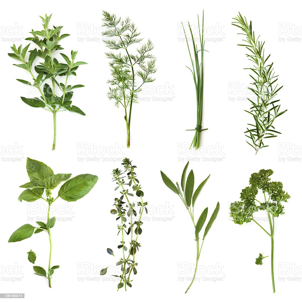 Picture of right different type of herbs stock photo