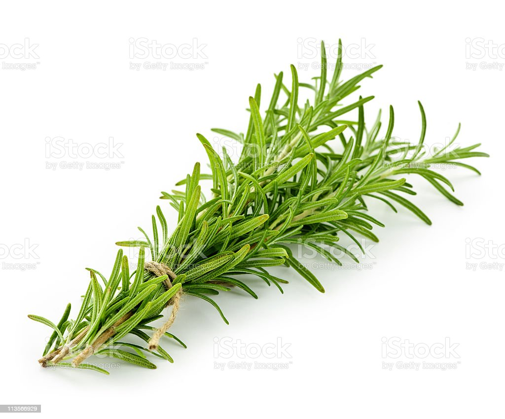 A picture of rosemary on a white background royalty-free stock photo