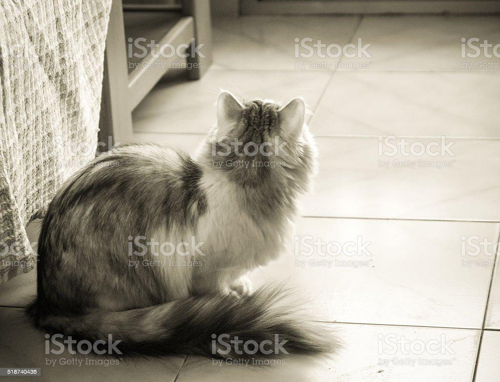 Photo de l'arrière d'un chat photo libre de droits