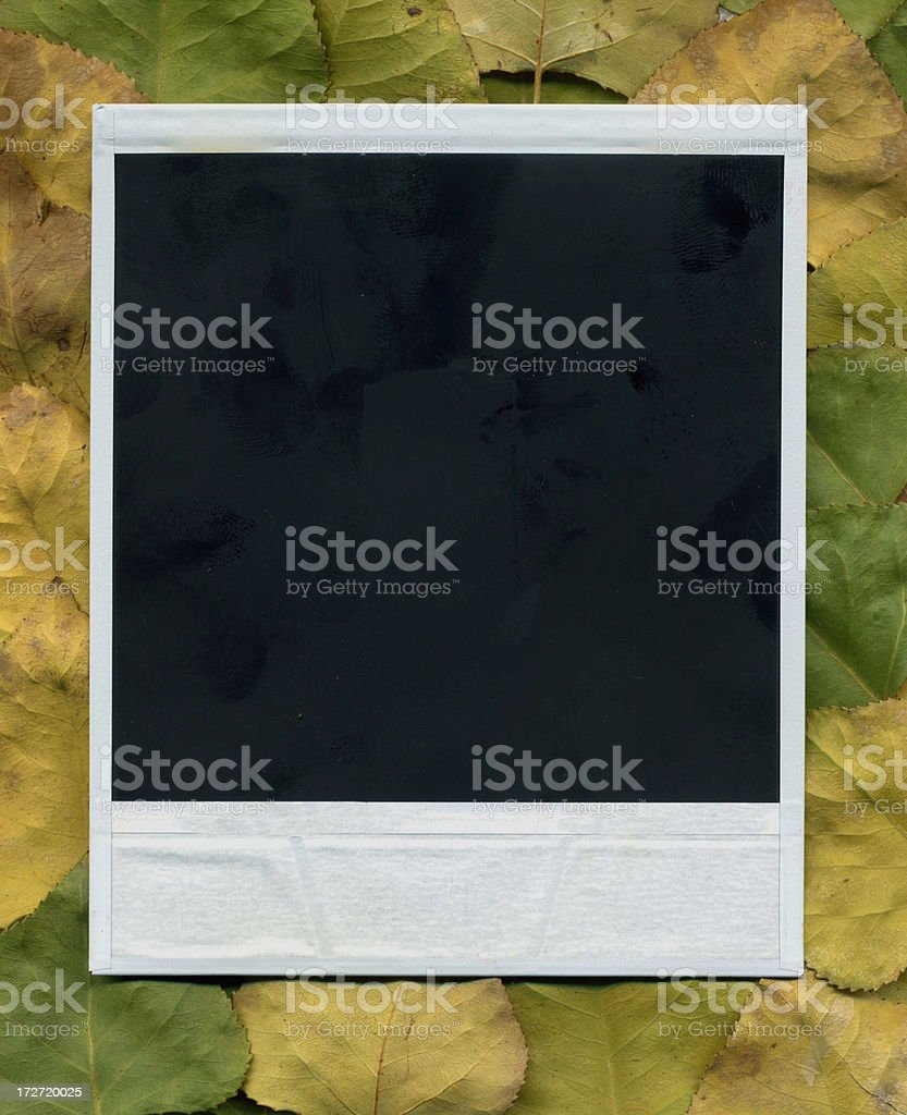 Picture on leaves royalty-free stock photo
