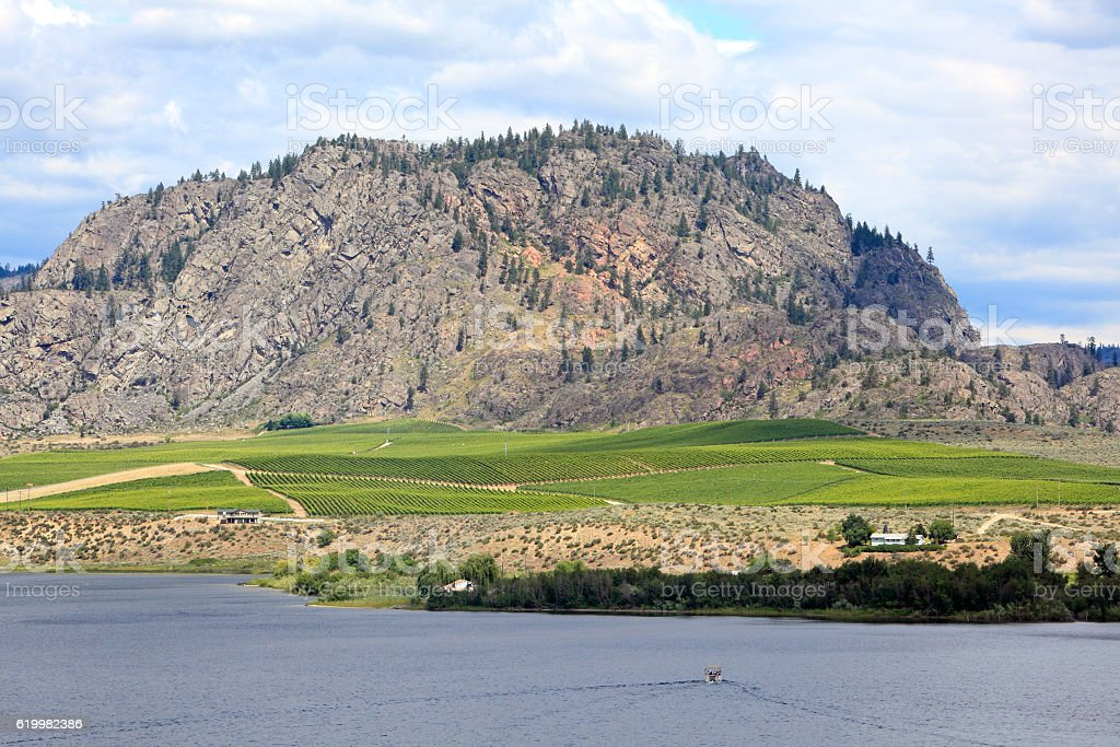Picture Perfect Vineyard Landscape In Southern Okanagan BC stock photo
