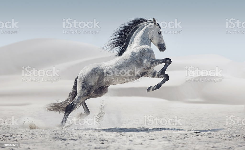 Picture presenting the galloping white horse stock photo