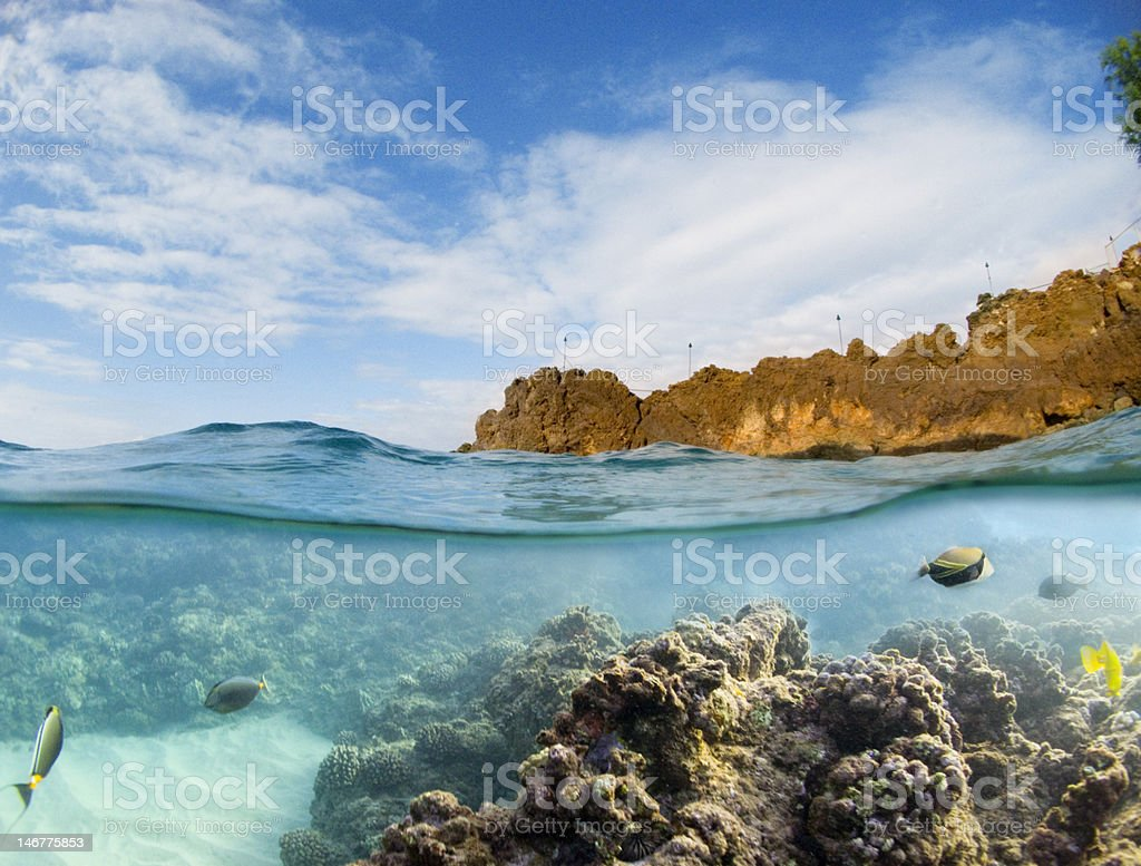 Picture that has half underwater view and half sky view stock photo