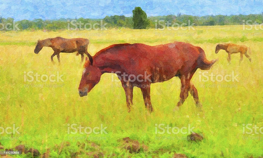 Picture three horses on a pasture royalty-free stock photo